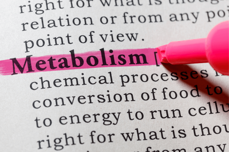 Word metabolism hightlighted in pink with definition of metabolism