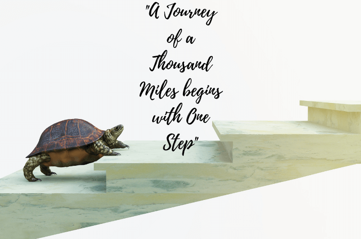 moving turtle wants to climbing stairs